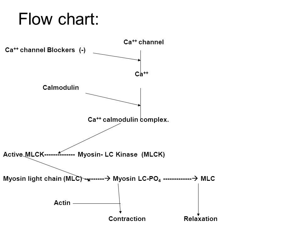 Flow chart: Ca++ channel Blockers (-) Ca++ Calmodulin