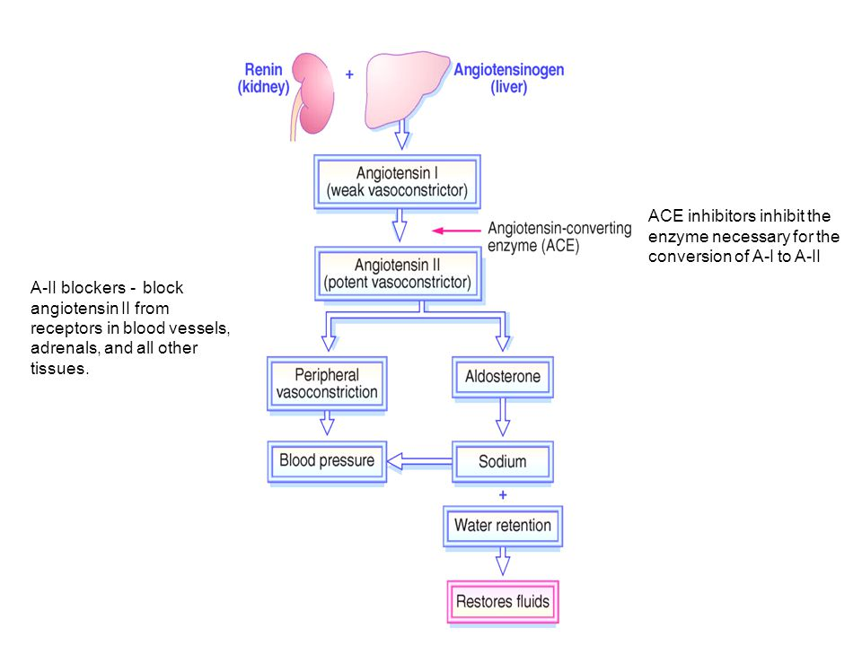 ACE inhibitors inhibit the enzyme necessary for the conversion of A-I to A-II