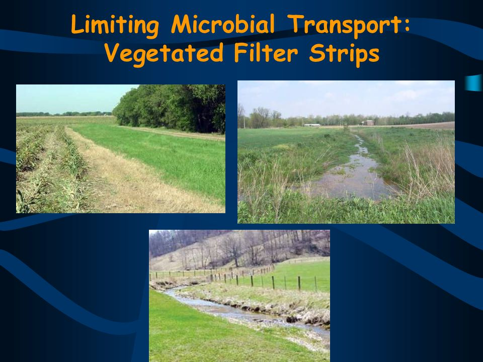 Limiting Microbial Transport: Vegetated Filter Strips