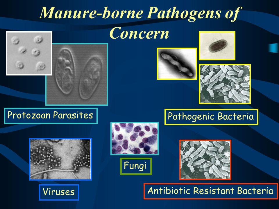 Manure-borne Pathogens of Concern