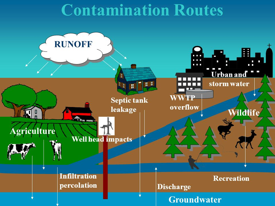 Contamination Routes RUNOFF Wildlife Agriculture Groundwater Urban and