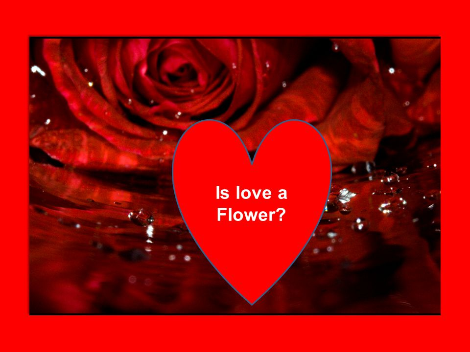 Is love a Flower