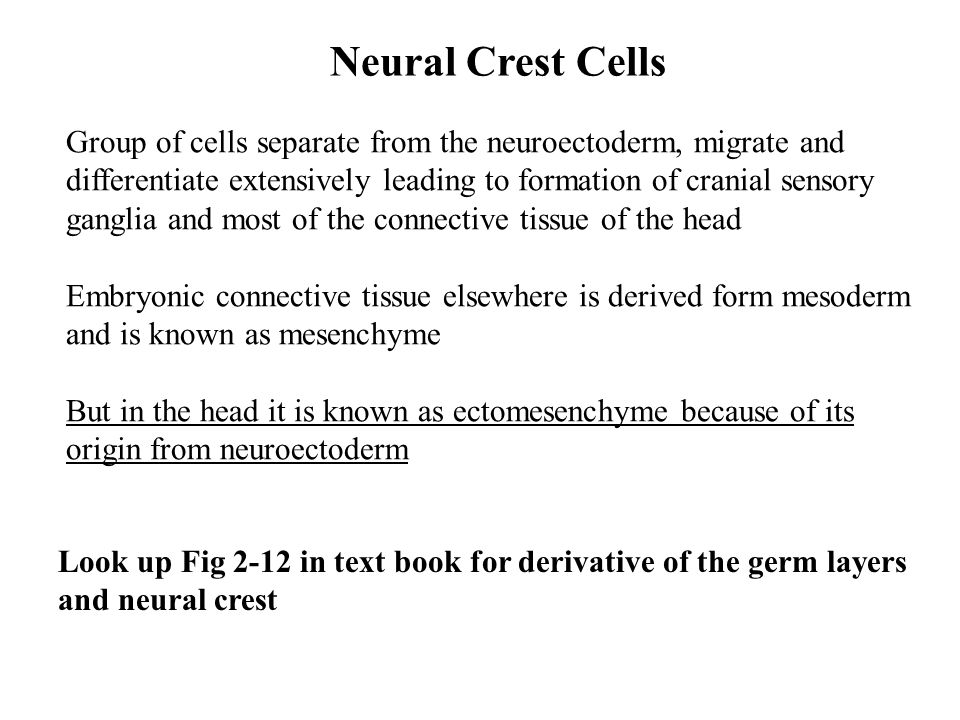 Neural Crest Cells Group of cells separate from the neuroectoderm, migrate and. differentiate extensively leading to formation of cranial sensory.