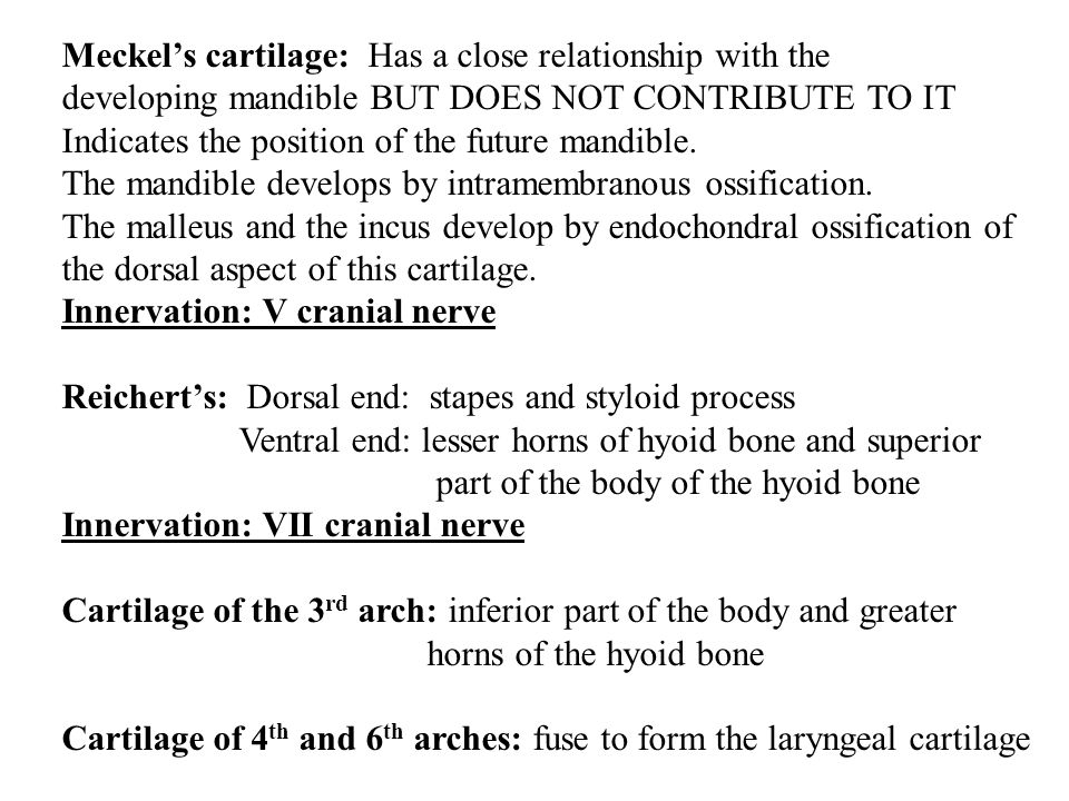 Meckel's cartilage: Has a close relationship with the