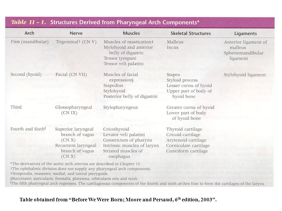 Table obtained from Before We Were Born; Moore and Persaud, 6th edition, 2003 .