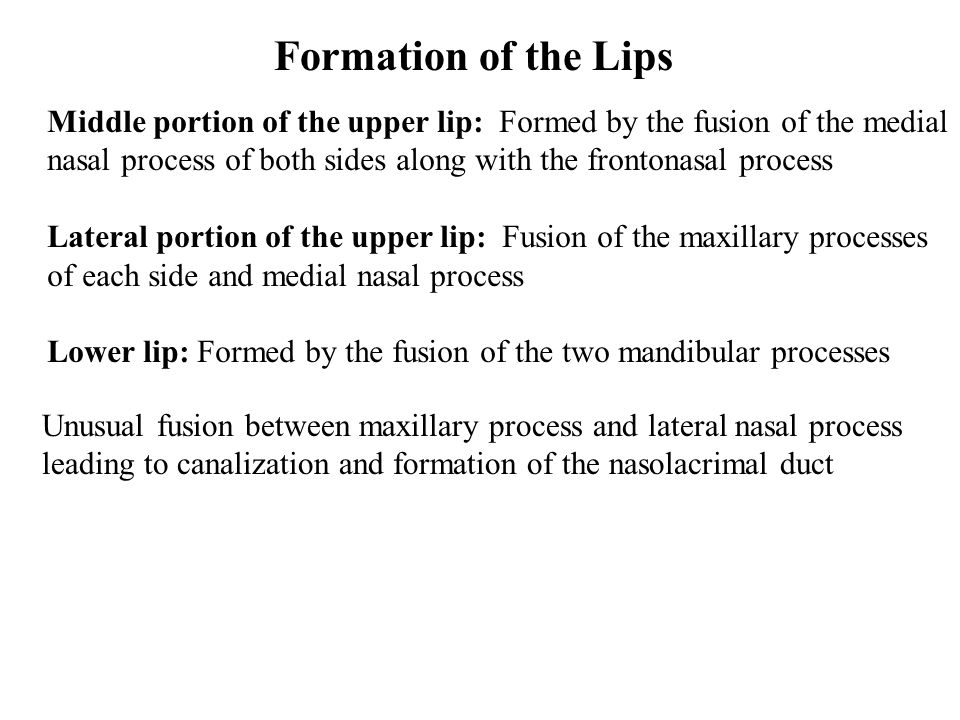 Formation of the Lips Middle portion of the upper lip: Formed by the fusion of the medial.