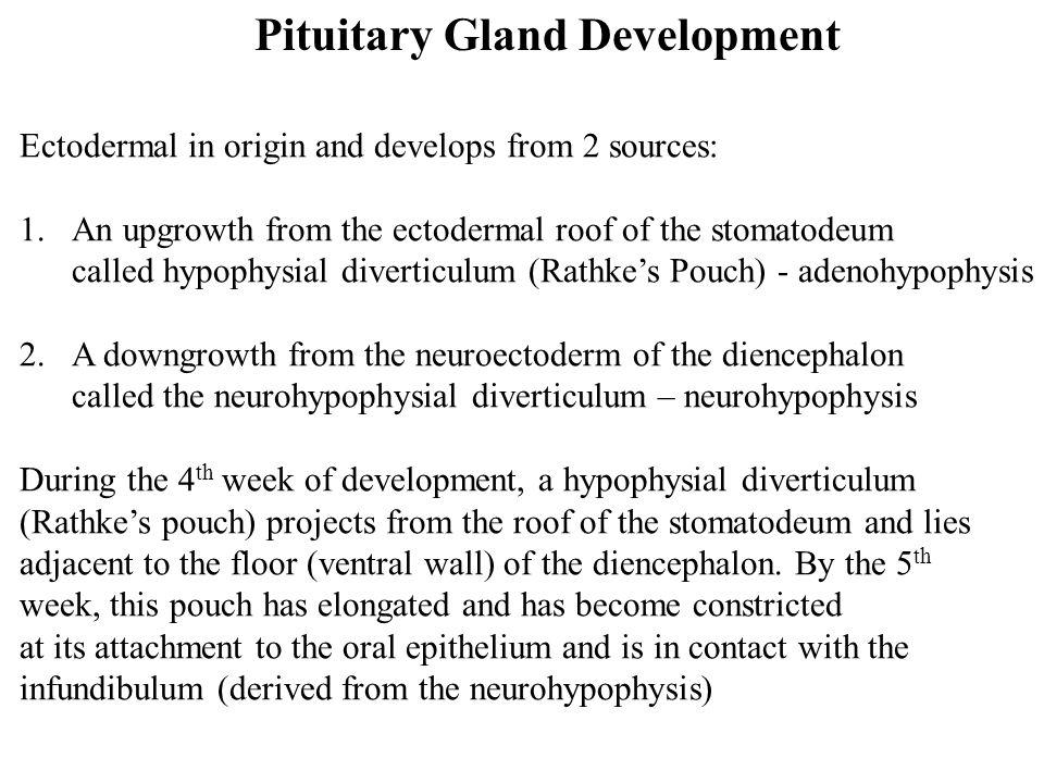Pituitary Gland Development