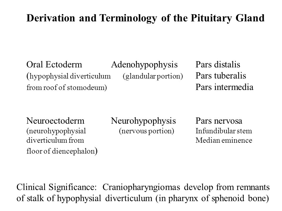 Derivation and Terminology of the Pituitary Gland