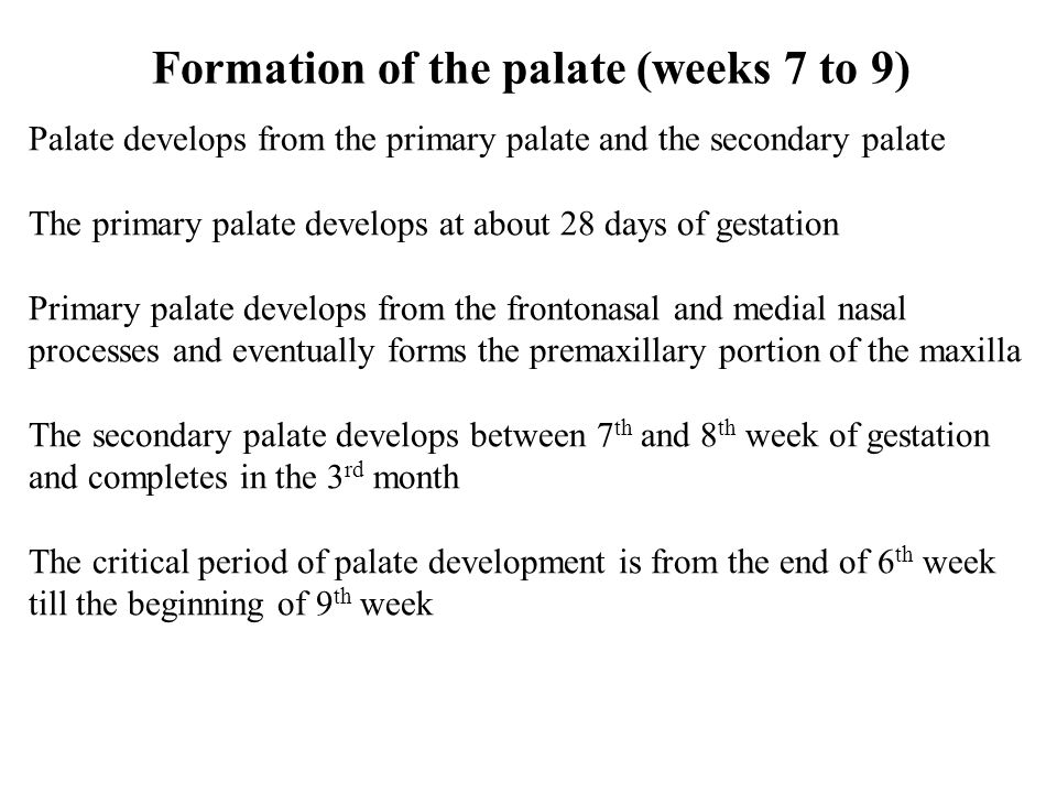 Formation of the palate (weeks 7 to 9)