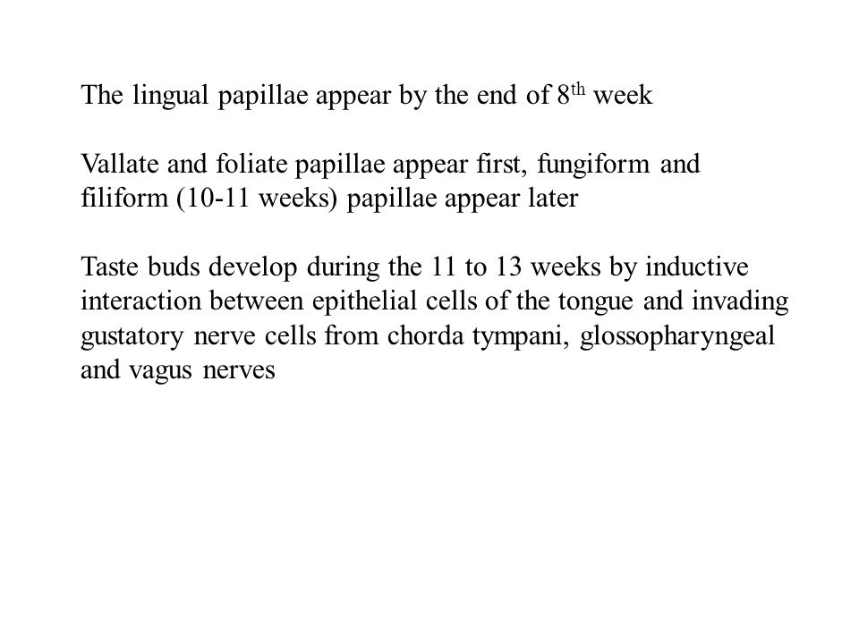 The lingual papillae appear by the end of 8th week