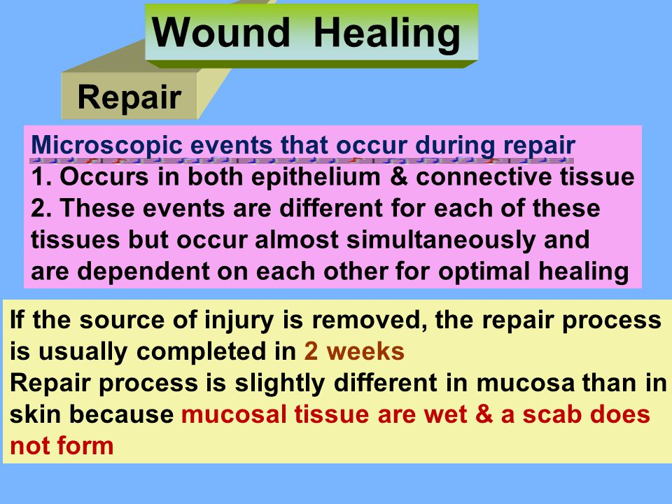 Wound Healing Repair Microscopic events that occur during repair