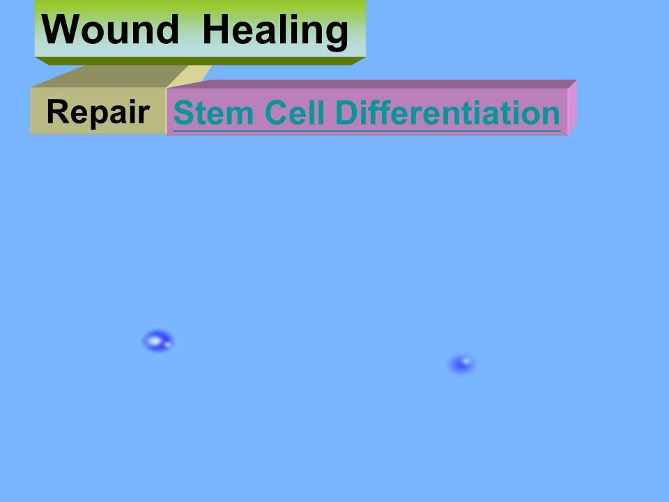 Wound Healing Repair Stem Cell Differentiation