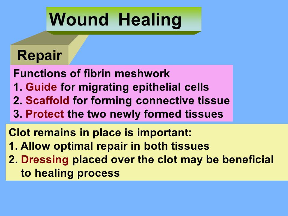 Wound Healing Repair Functions of fibrin meshwork