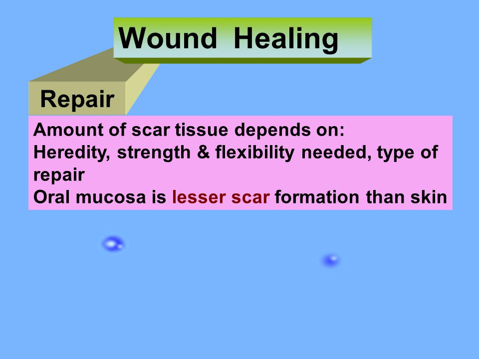 Wound Healing Repair Amount of scar tissue depends on: