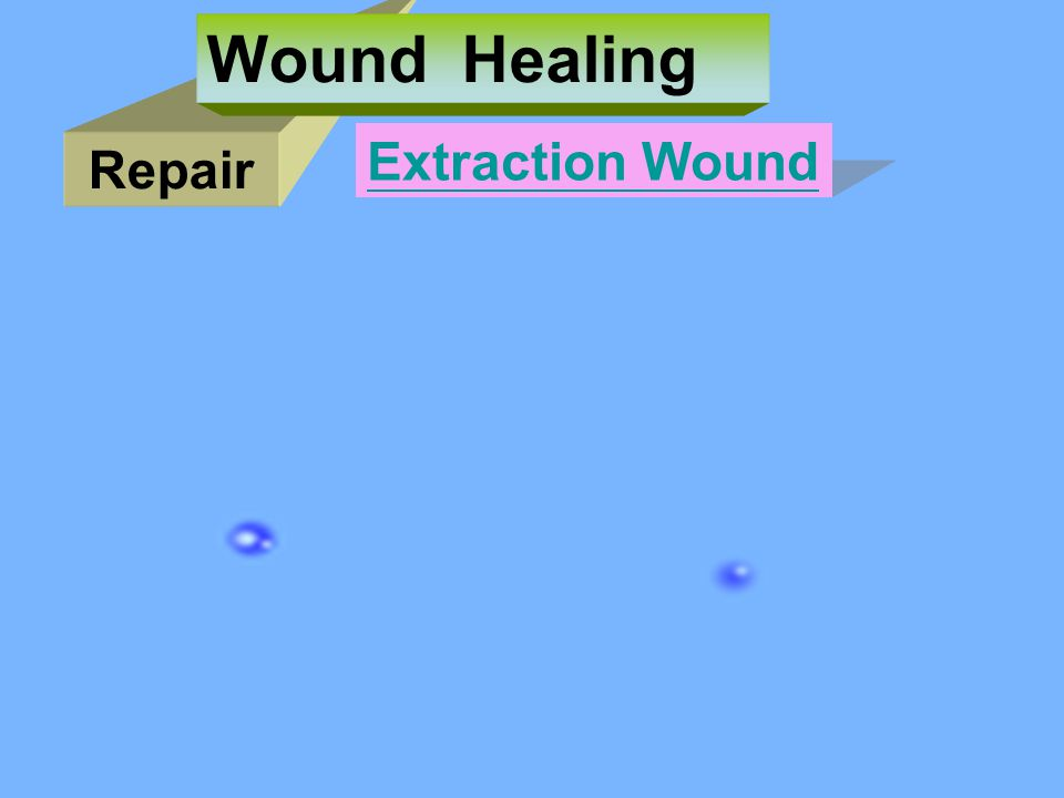 Wound Healing Extraction Wound Repair
