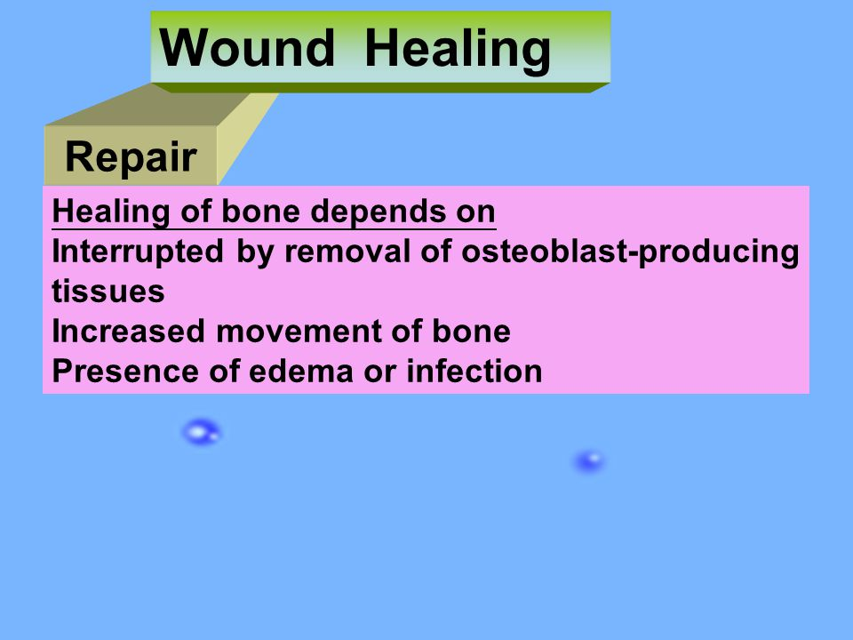 Wound Healing Repair Healing of bone depends on