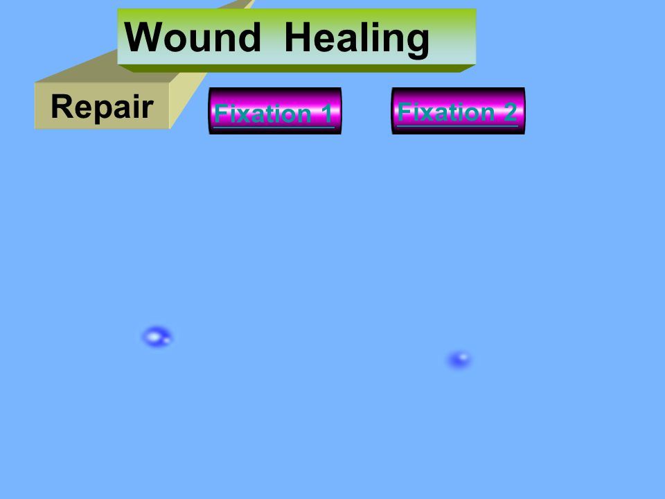 Wound Healing Repair Fixation 1 Fixation 2