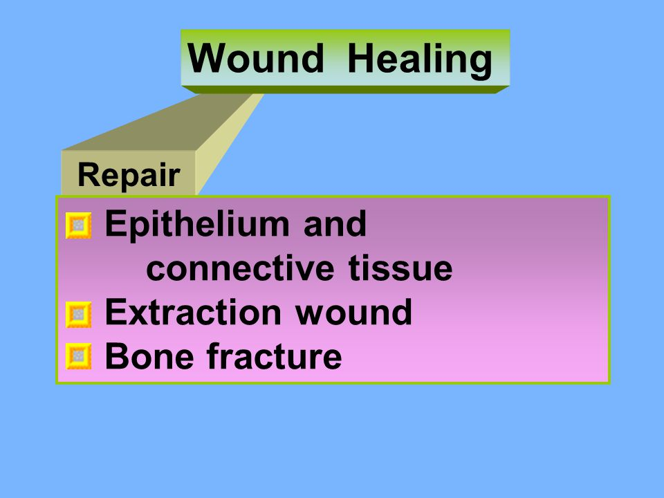 Wound Healing Epithelium and connective tissue Extraction wound