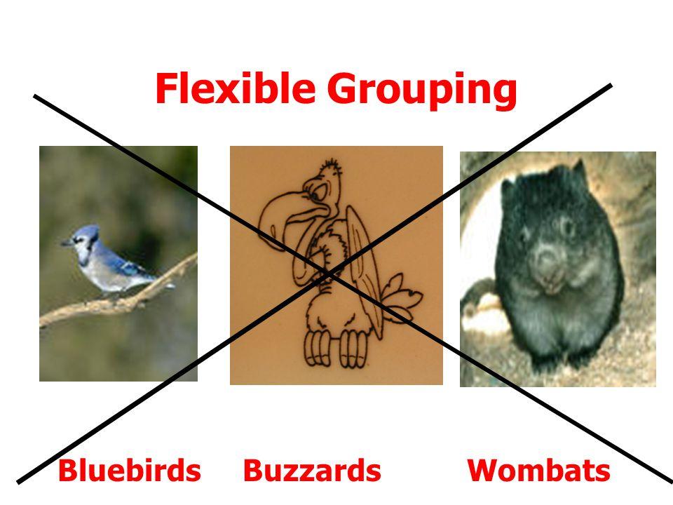 Flexible Grouping Bluebirds Buzzards Wombats