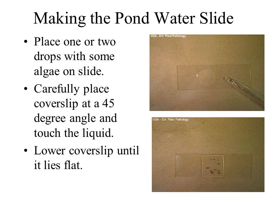 Making the Pond Water Slide