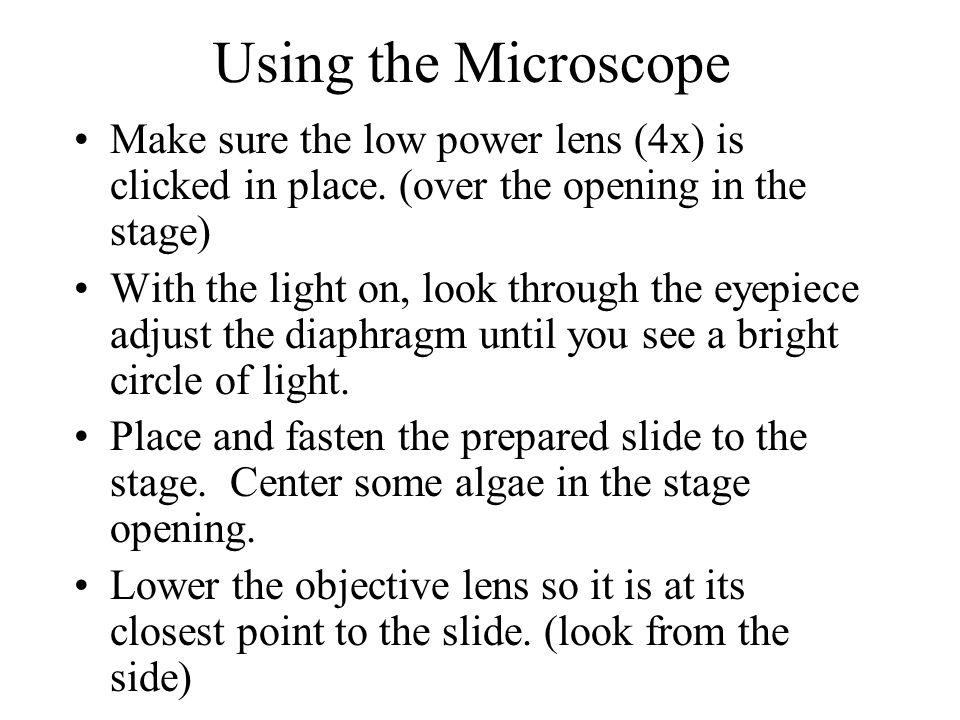 Using the Microscope Make sure the low power lens (4x) is clicked in place. (over the opening in the stage)
