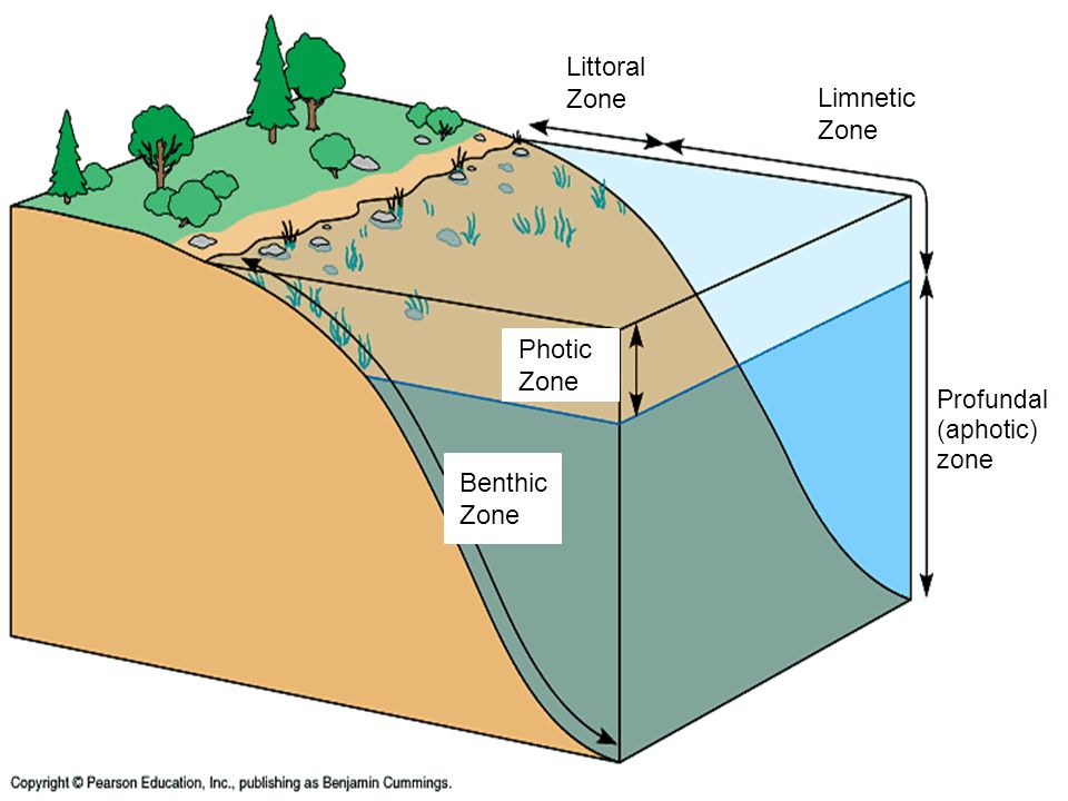 Littoral Zone Limnetic Zone Photic Zone Benthic Zone