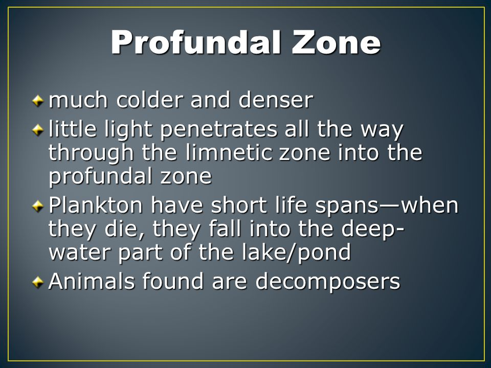 Profundal Zone much colder and denser
