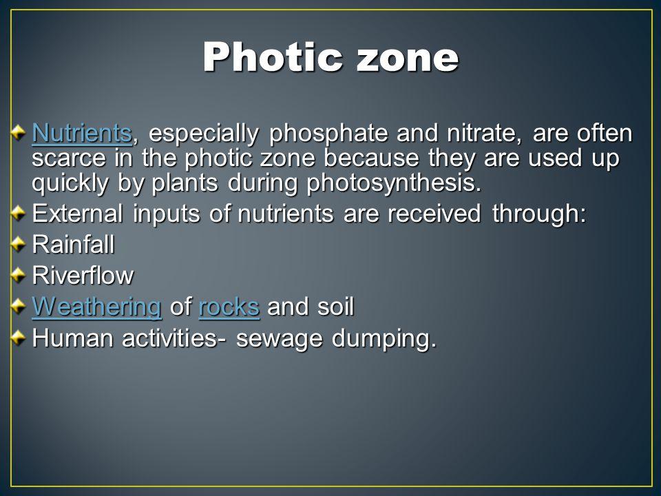 Photic zone