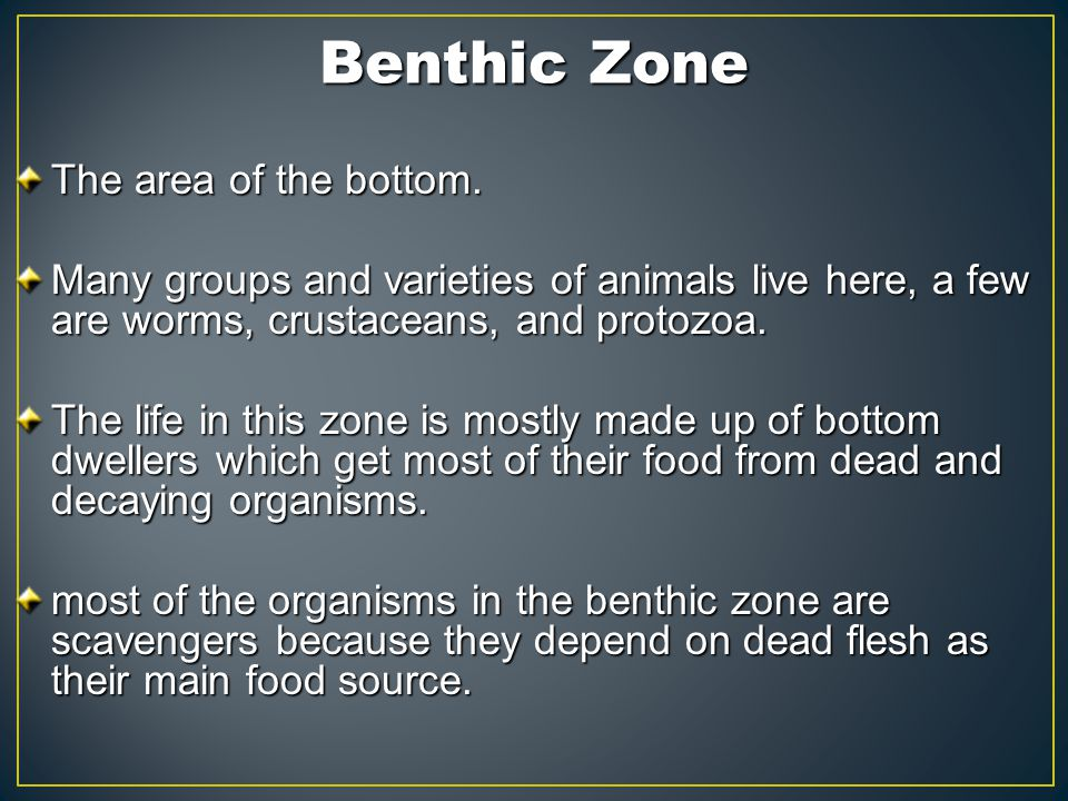 Benthic Zone The area of the bottom.