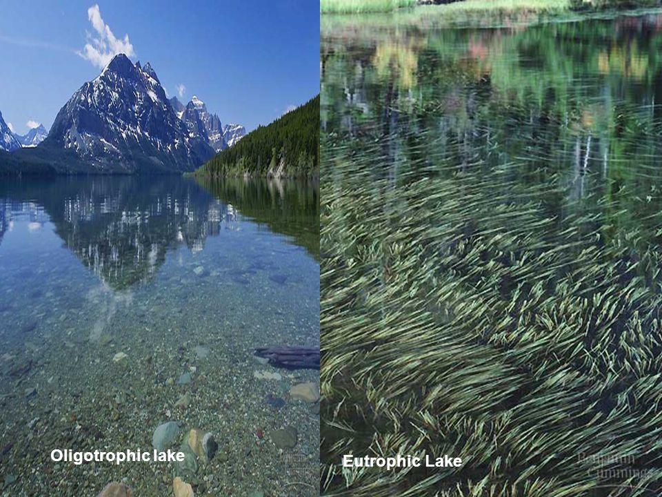 Oligotrophic lake Eutrophic Lake