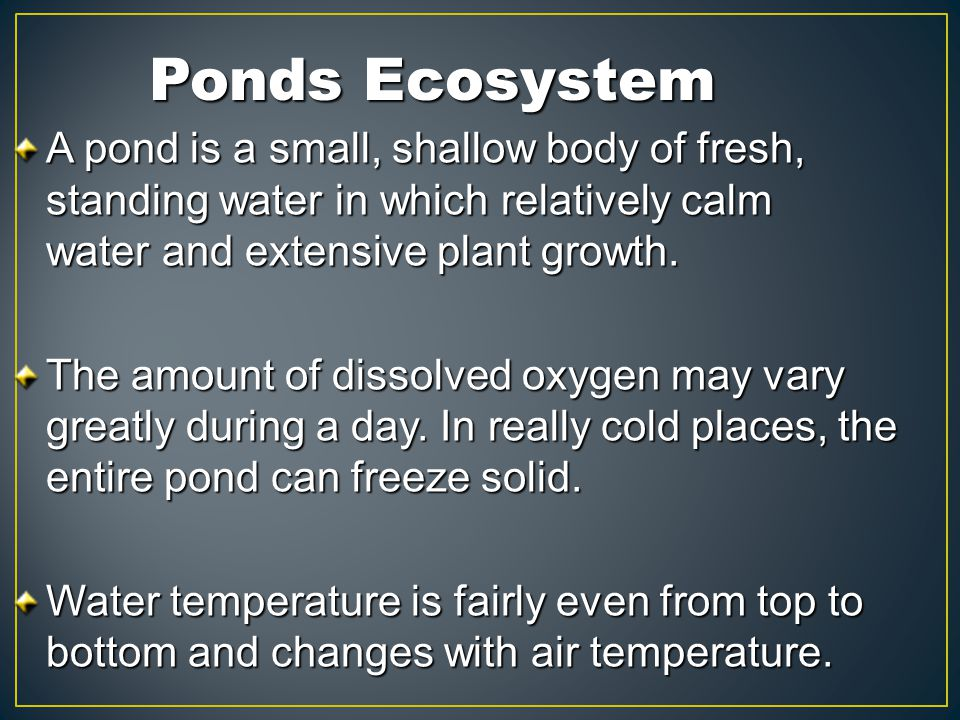 Ponds Ecosystem A pond is a small, shallow body of fresh, standing water in which relatively calm water and extensive plant growth.