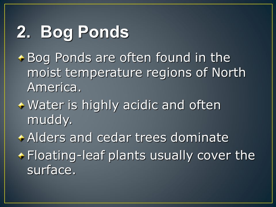 2. Bog Ponds Bog Ponds are often found in the moist temperature regions of North America. Water is highly acidic and often muddy.