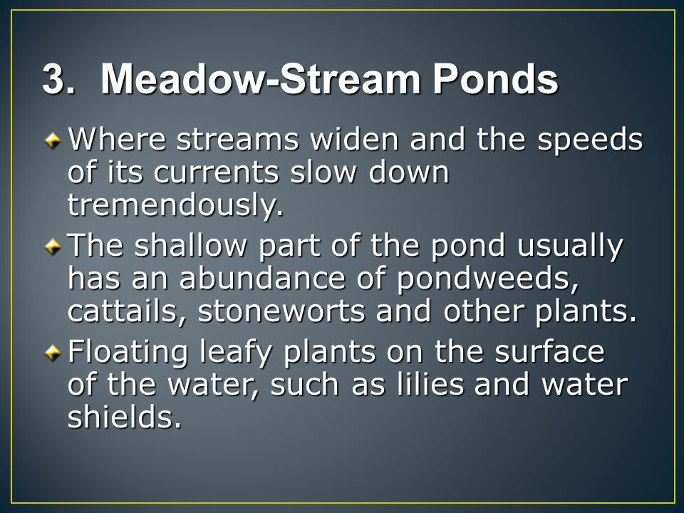 3. Meadow-Stream Ponds Where streams widen and the speeds of its currents slow down tremendously.