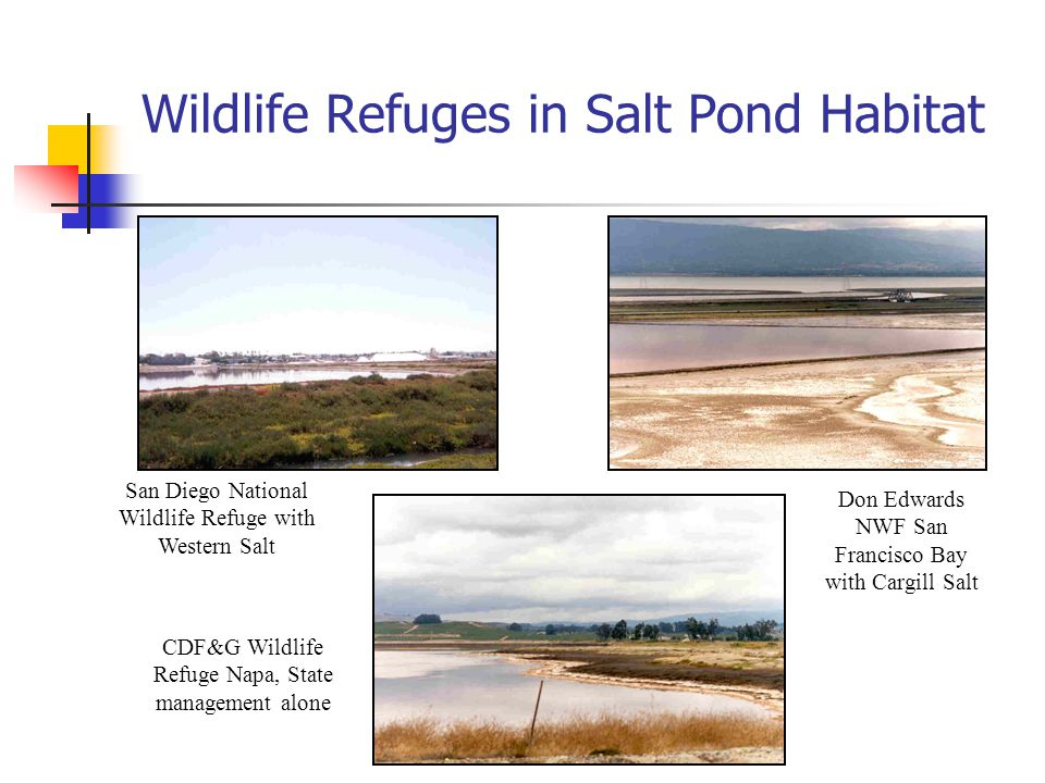 Wildlife Refuges in Salt Pond Habitat