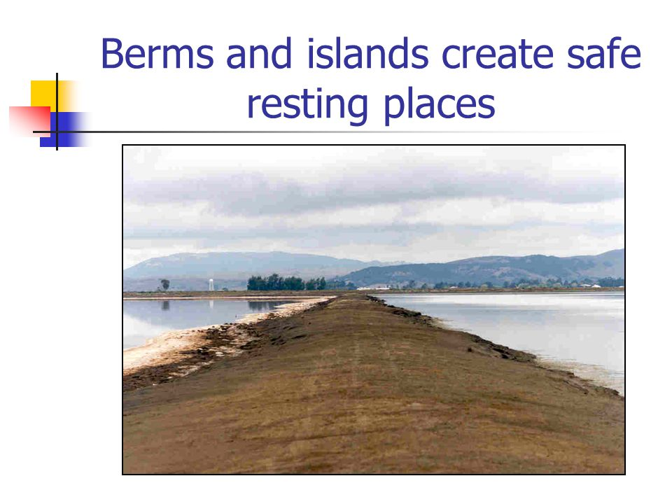 Berms and islands create safe resting places