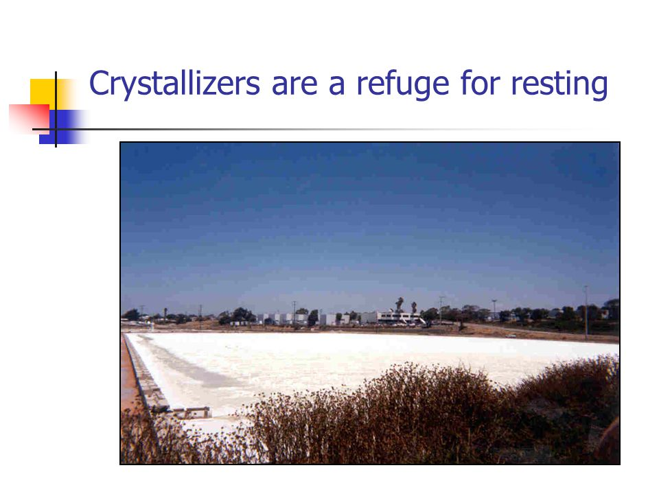 Crystallizers are a refuge for resting