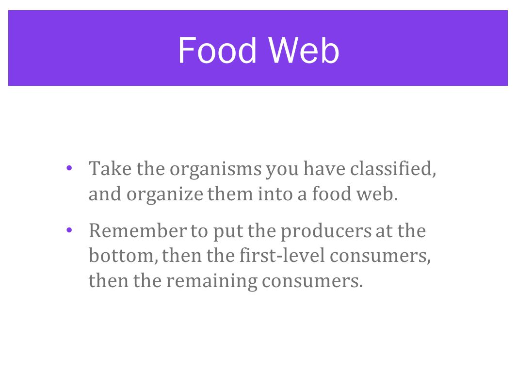 Food Web Take the organisms you have classified, and organize them into a food web.
