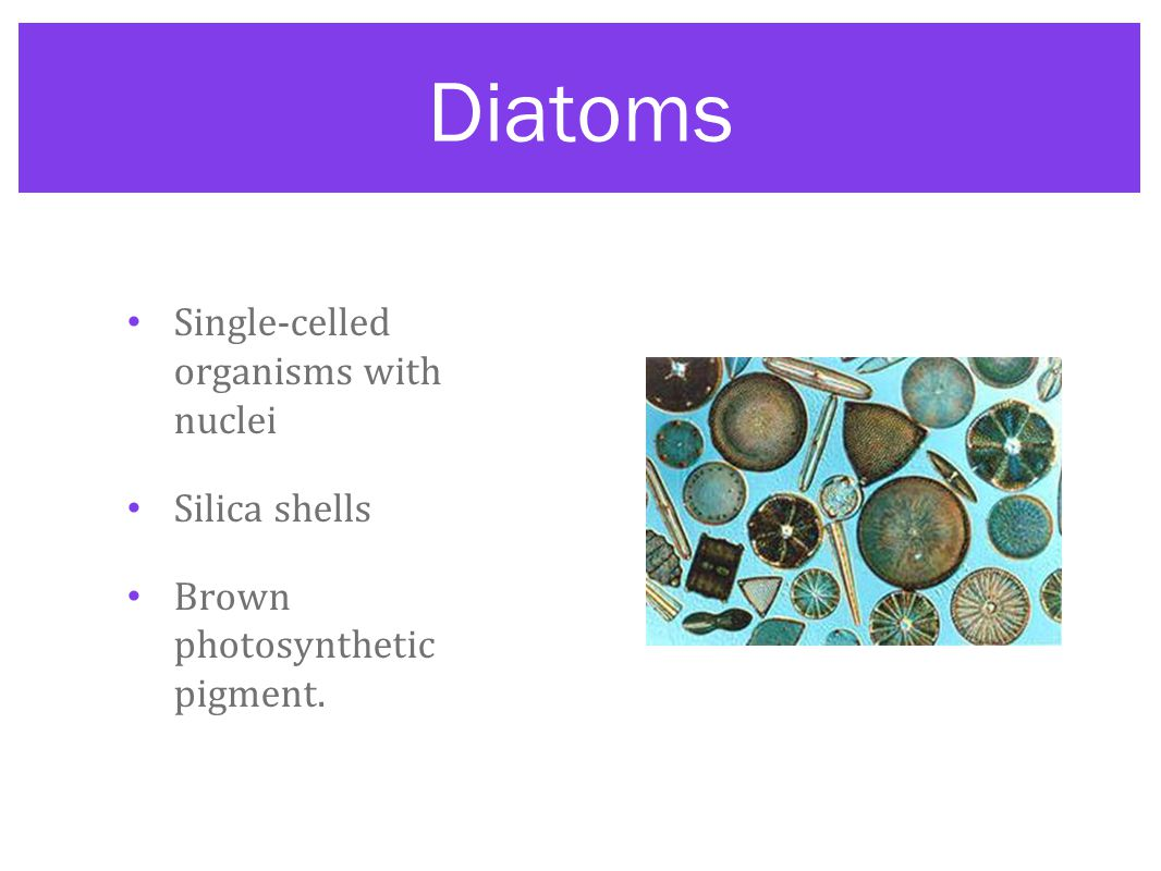 Diatoms Single-celled organisms with nuclei Silica shells
