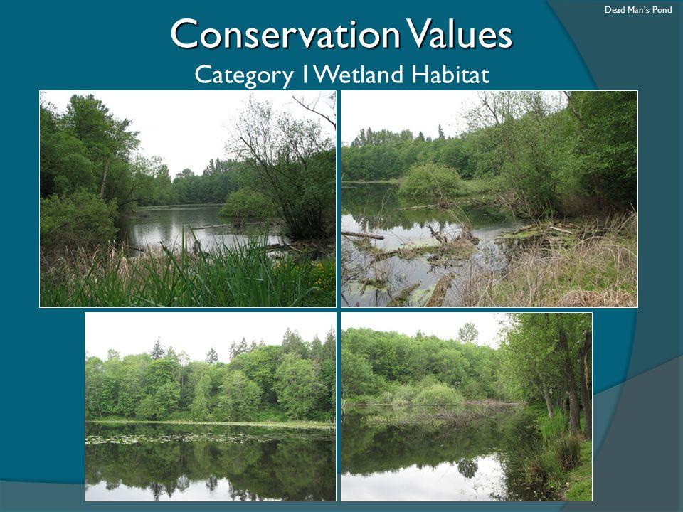 Category I Wetland Habitat