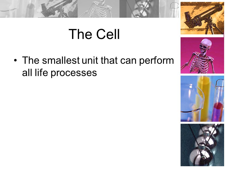 The Cell The smallest unit that can perform all life processes