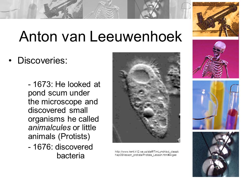 Cell Theory and the Scientists Who Helped Shape It - ppt ...