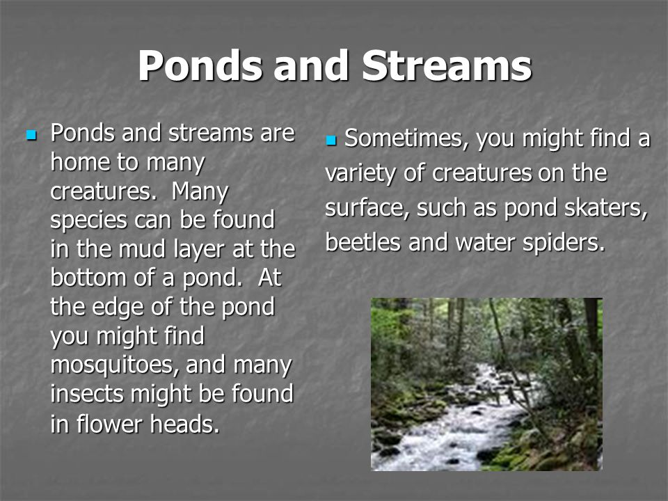 Ponds and Streams