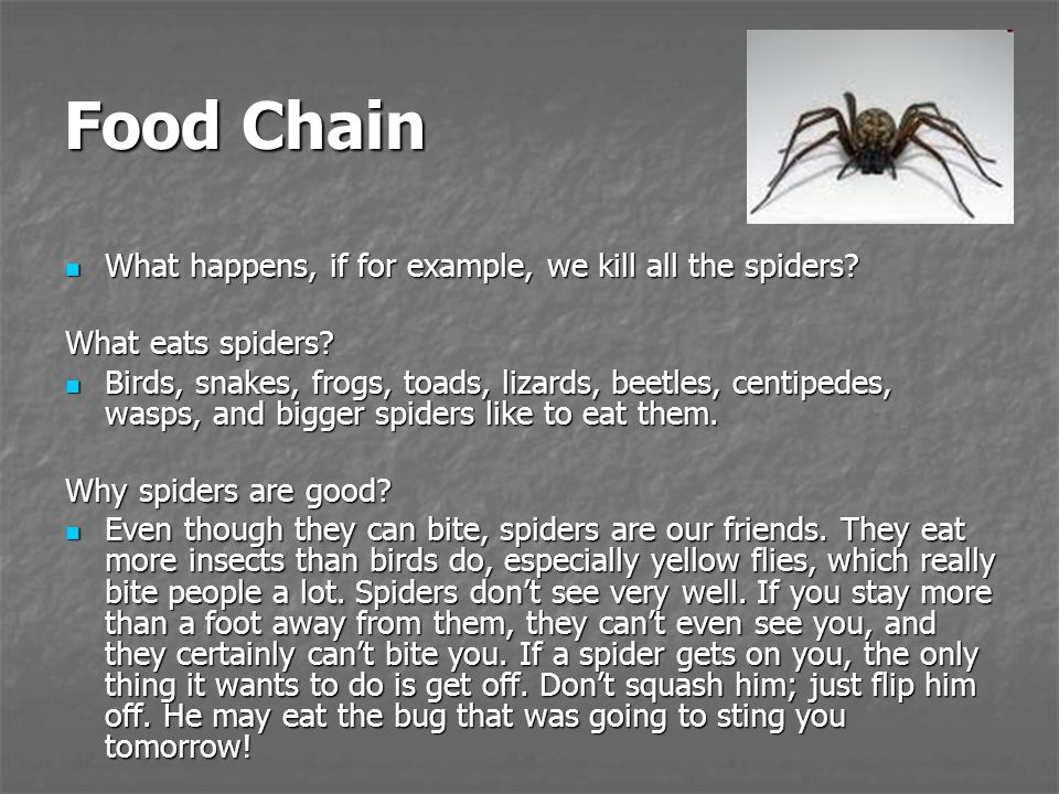 Food Chain What happens, if for example, we kill all the spiders