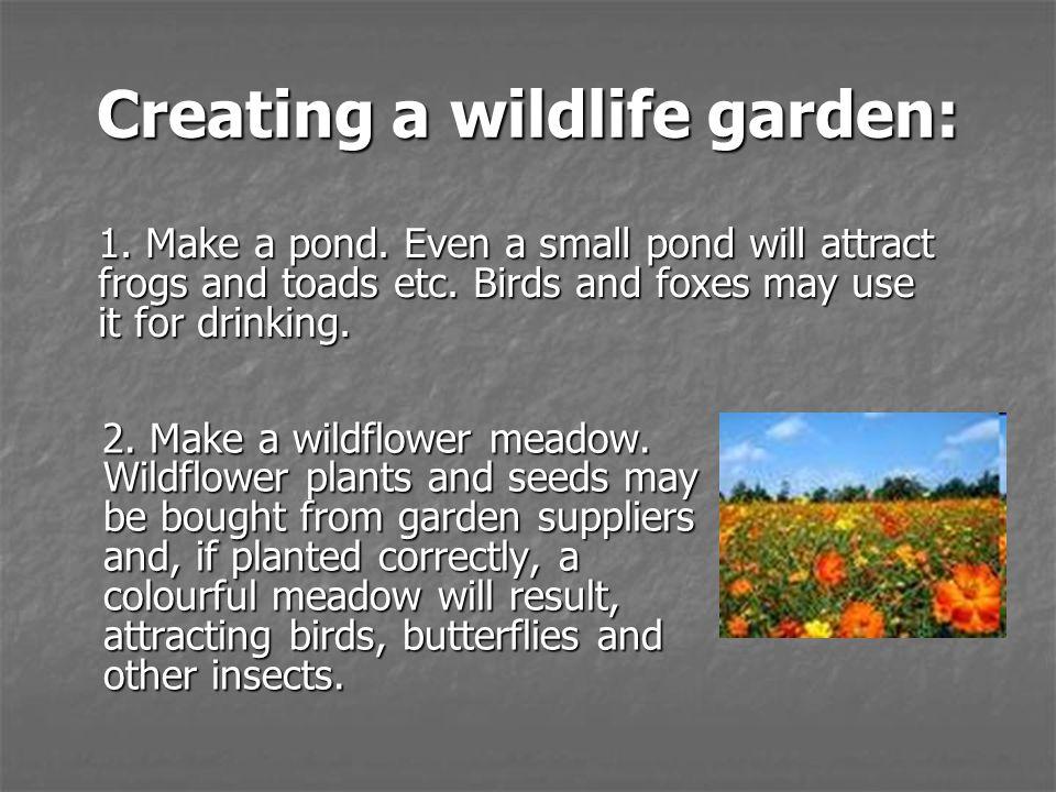 Creating a wildlife garden: