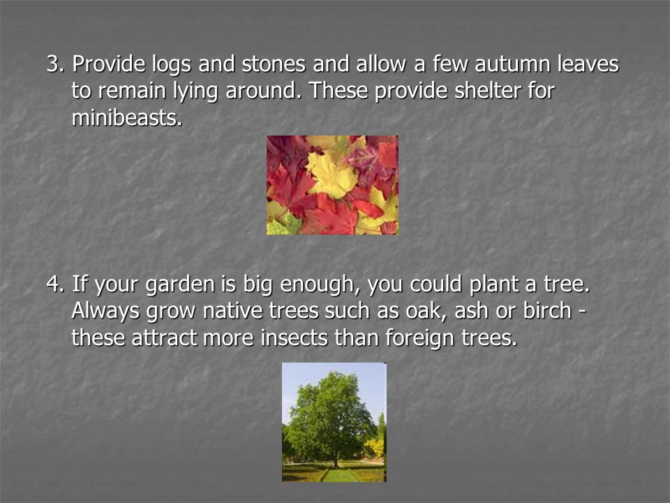 3. Provide logs and stones and allow a few autumn leaves to remain lying around. These provide shelter for minibeasts.