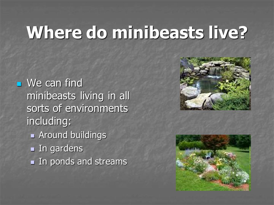 Humans and minibeasts ppt video online download for Garages you can live in
