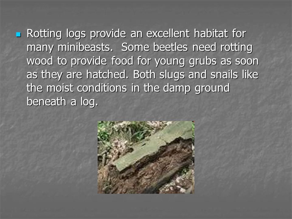 Rotting logs provide an excellent habitat for many minibeasts
