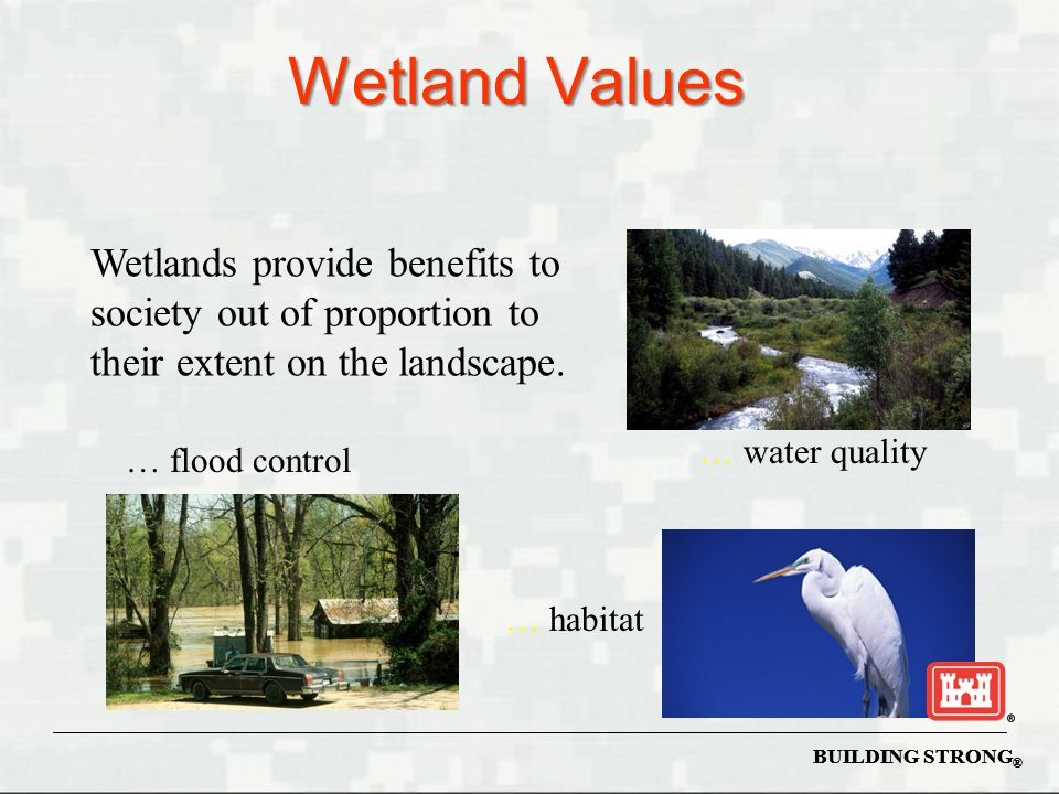Wetland Values Wetlands provide benefits to society out of proportion to their extent on the landscape.