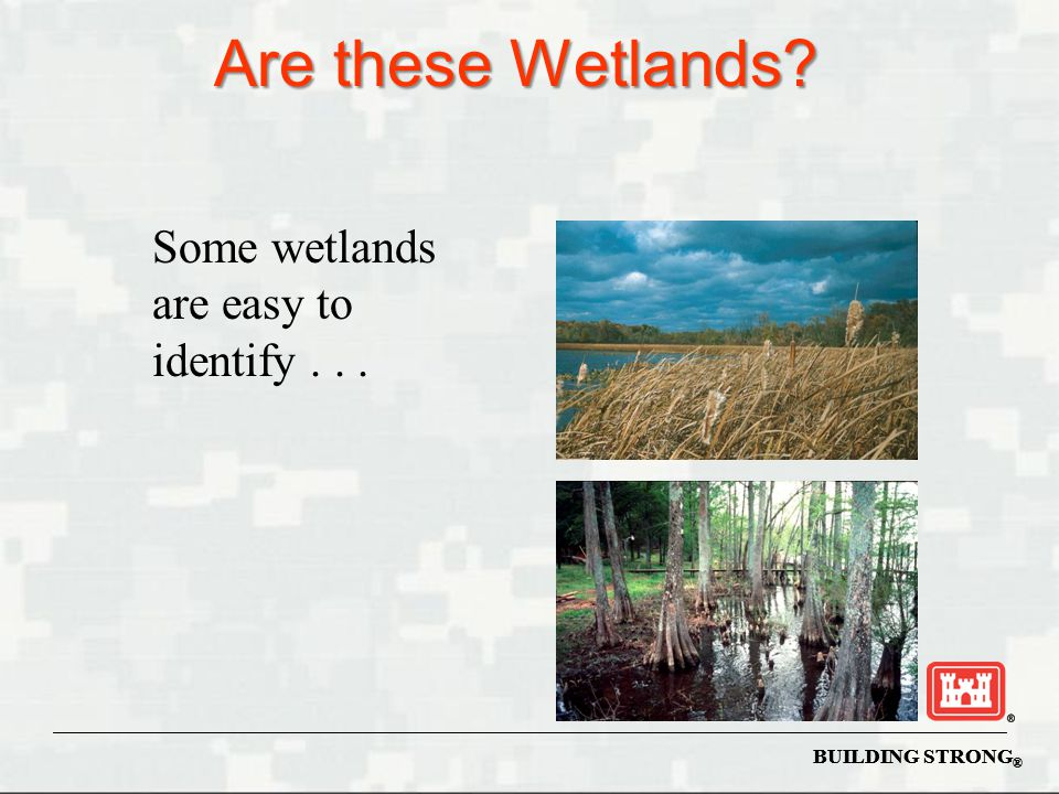 Are these Wetlands Some wetlands are easy to identify . . .