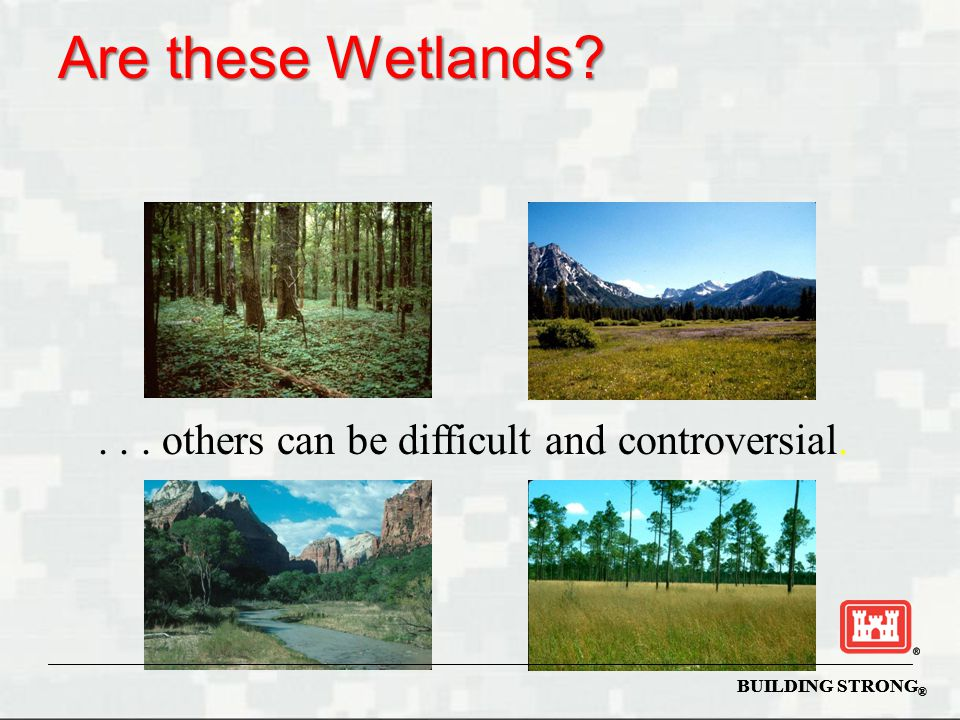 Are these Wetlands . . . others can be difficult and controversial.